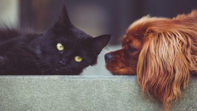 Photo of Cane o gatto? La tua scelta rivela molto sulla tua personalità