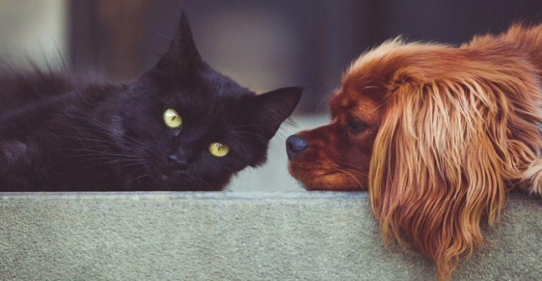 Cane o gatto? Quale preferisci ?