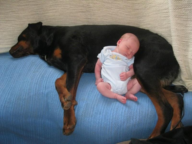Cane Rottweiler salva neonato