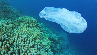 Photo of Basta agli oggetti in plastica monouso. Entro il 2021 saranno vietati nei Paesi UE