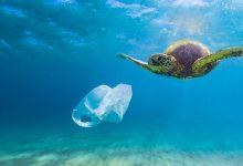 Photo of 10 motivi per cui non dovresti usare i sacchetti di plastica per la spesa