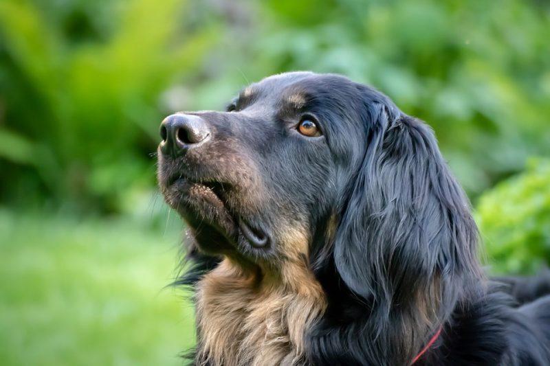 I cani percepiscono le vere intenzioni degli umani