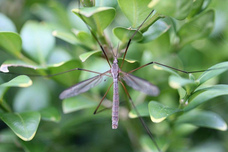 Perché le zanzare non pungono tutti