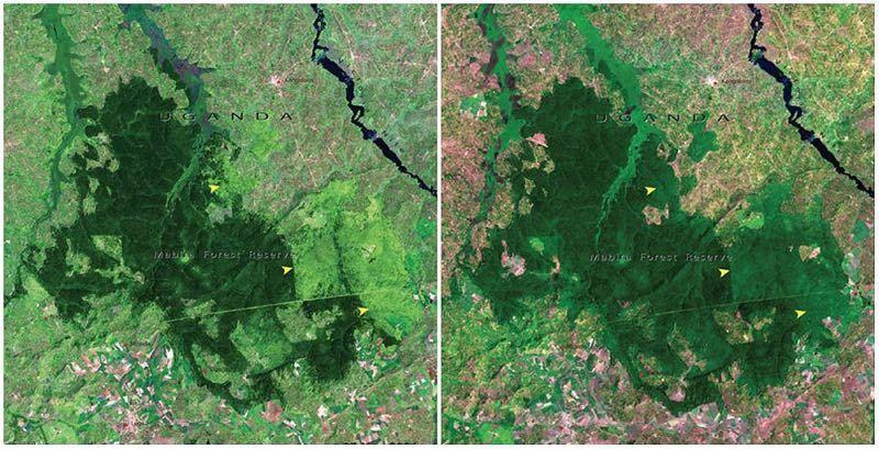 Foresta Mabira, Uganda