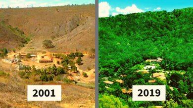 Photo of La coppia impiega 20 anni per ricreare la foresta distrutta. E finalmente gli animali tornano a popolarla