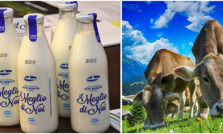Trento. Torna il latte nelle bottiglie di vetro
