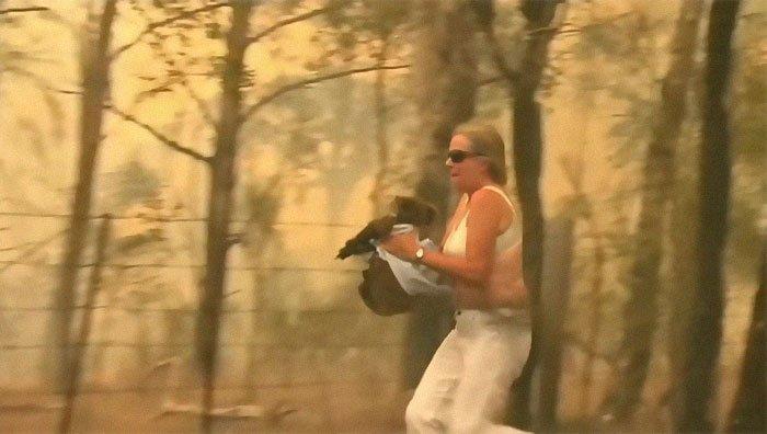 Australia. Salvano koala dalle fiamme