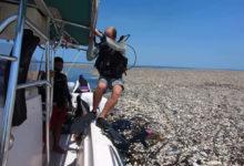 Photo of Il mare di plastica scoperto nei Caraibi diventa sempre più vasto e soffoca la fauna locale