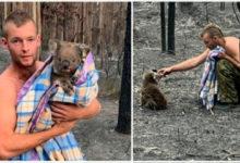 Photo of Australia. Cacciatore rischia la vita per salvare i koala dalle fiamme