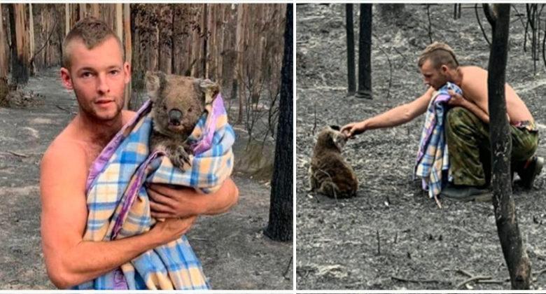 Rischia la vita per salvare i koala in Australia