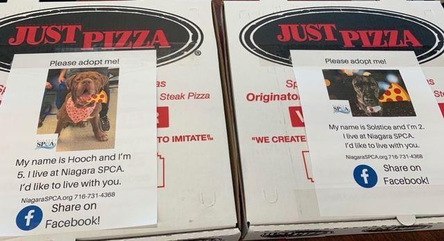 Pizzeria stampa sui cartoni le foto dei cani da adottare