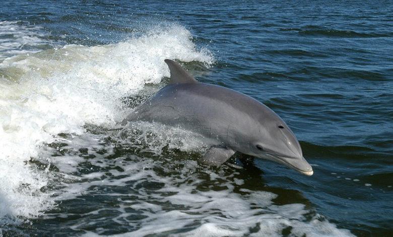 Delfini nei porti italiani