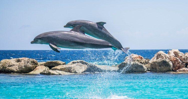 Nei porti italiani arrivano i delfini