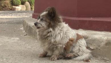 Photo of La storia della cagnolina cieca che da 10 anni aspetta il proprietario nello stesso posto dove è stata abbandonata