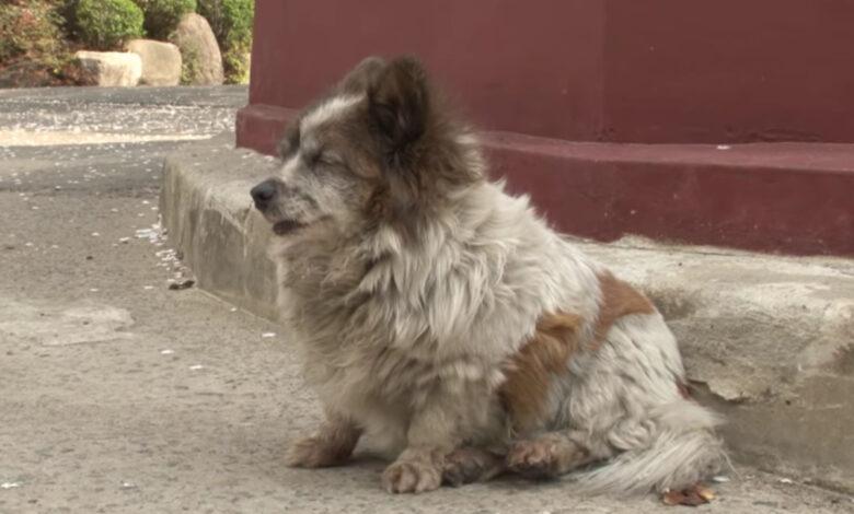 La cagnolina cieca aspetta il padrone