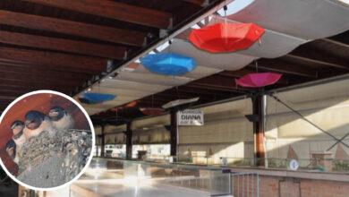 Photo of Le rondini fanno il nido nel mercato coperto, i commercianti appendono per loro ombrelli colorati