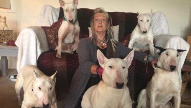 Photo of Un marito costringe la moglie a scegliere tra lui o i suoi cani. La donna non esita un istante e prende la sua decisione senza rimpianti