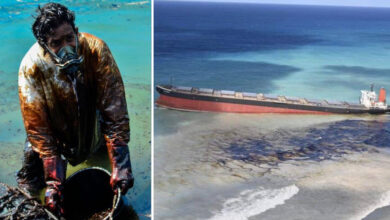 Photo of Il popolo di Mauritius dona i propri capelli per salvare il mare dalle tonnellate di carburante che si stanno riversando dalla petroliera incagliata