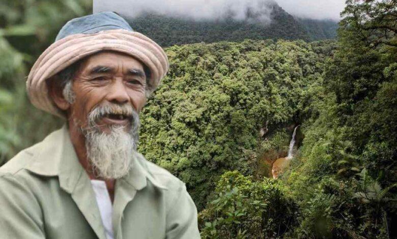 nonno ha piantato più di 11.000 alberi