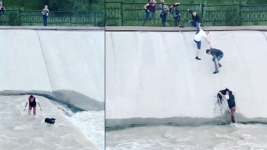 Photo of Alcuni passanti formano una catena umana per salvare un cane che rischia di annegare. Il video dell'eroico salvataggio diventa subito virale