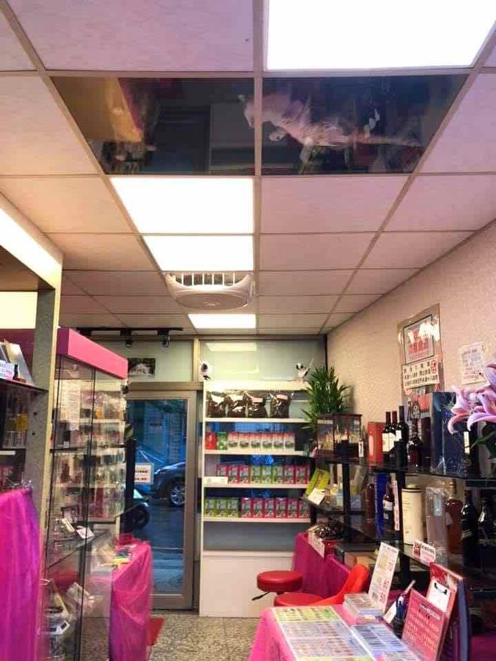 Panello di vetro per i gatti