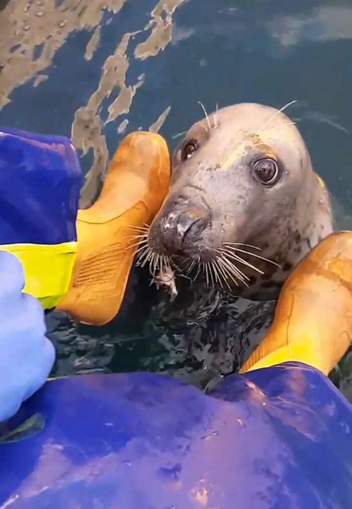 l'amicizia tra pescatore e foca cieca