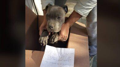 Photo of Un bambino abbandona il suo cane in un rifugio per evitare che suo padre continui a fargli del male