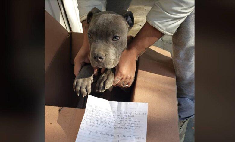 Il suo cane in un rifugio