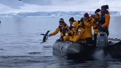 Photo of Un pinguino fugge dalle orche assassine saltando su una barca piena di turisti che applaudono il suo coraggio