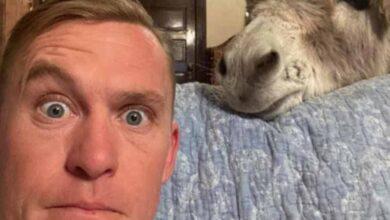 Photo of Un asino crede di essere un cane: le sue immagini diventano subito virali e conquistano tutti