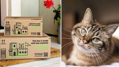 Photo of Le scatole dei pacchi di Amazon diventano casette per i gatti: la bella iniziativa del colosso a favore dell'ambiente
