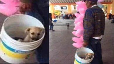 Photo of Vende zucchero filato in compagnia del suo inseparabile cucciolo dentro il secchio. La vicenda scalda i cuori del web