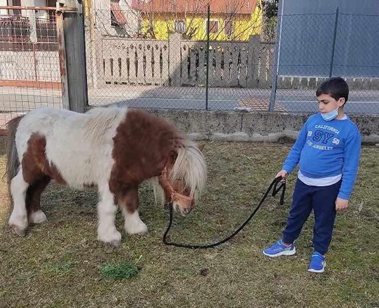 Cerco una casa per mio pony