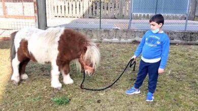 """Photo of """"Cerco una casa per il mio pony"""", l'appello di un bambino di 8 anni che non vuole separarsi dal suo amico a quattro zampe"""