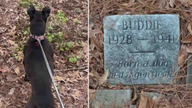 Photo of Un ragazzo scopre la tomba di un cane, vecchia di 80 anni, in mezzo al parco e scoppia in lacrime dopo aver letto l'iscrizione