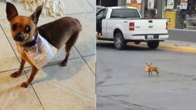 Photo of Un uomo in quarantena manda il suo cane in missione per comprare un sacchetto di snack. Le foto del cucciolo diventano virali