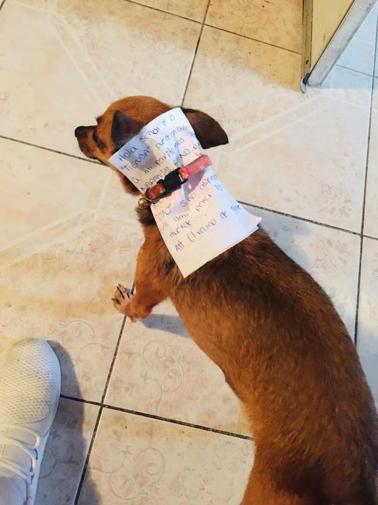 Un uomo quarantena manda il suo cane