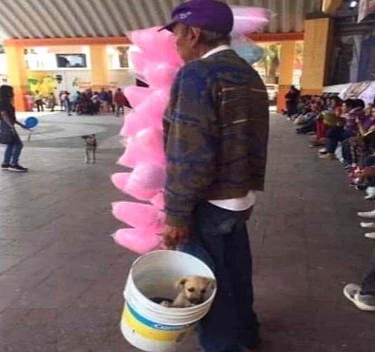 Vende zucchero filato in compagnia del suo cucciolo
