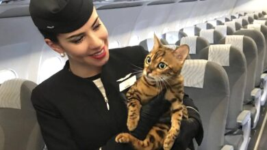 """Photo of """"Non siamo bagagli, siamo esseri viventi"""": la campagna che rivendica il diritto degli animali a viaggiare accanto ai loro padroni in aereo"""