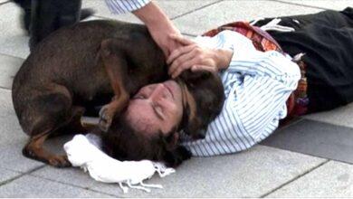 """Photo of Un cane randagio interrompe la rappresentazione teatrale per """"salvare"""" un attore che finge di essere ferito. Le immagini che riprendono la scena spopolano in rete"""