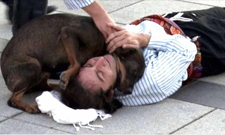 Un cane randagio interrompe rappresentazione teatrale