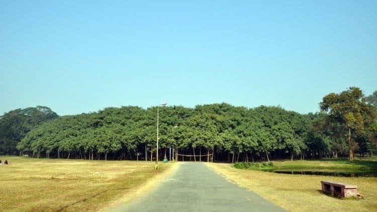 albero piu grande del mondo India