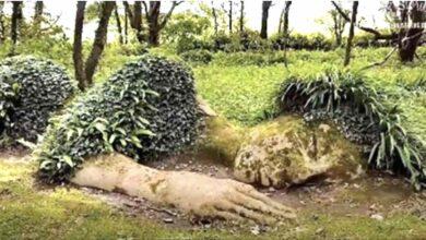 Photo of L'imponente scultura vivente che cambia aspetto a seconda della stagione: le immagini presenti in rete lasciano senza parole