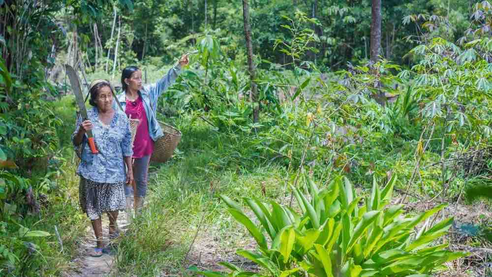Da sola ha salvato 800mila ettari di foresta amazzonica 2