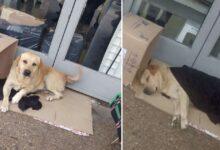 Photo of Un cane aspetta il suo padrone davanti alla porta dell'ospedale ma lui è morto: la storia del povero Toto ha commosso molte persone