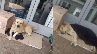 Photo of Un cane aspetta per giorni il padrone morto davanti alla porta dell'ospedale: la storia del fedele Toto commuove il mondo
