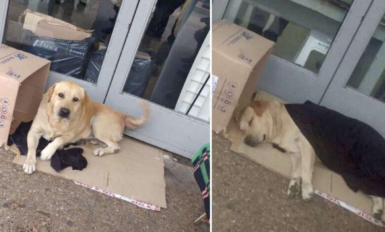 Un cane aspetta il suo padrone davanti alla porta