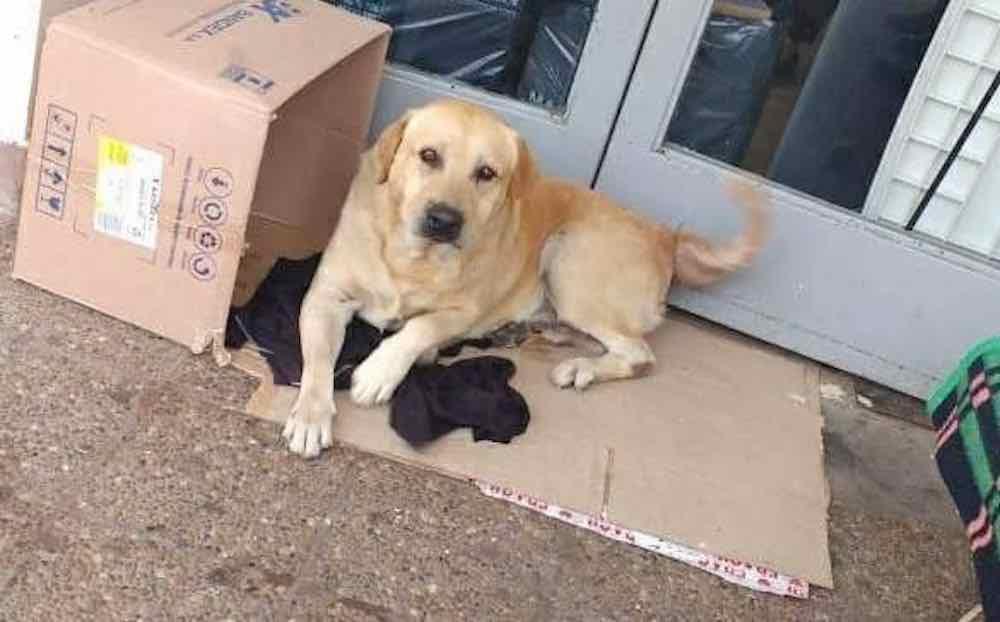 Un cane aspetta il suo padrone davanti porta