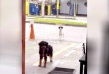 Photo of Un cane randagio porta il suo amico affamato al ristorante dove trova sempre cibo: le immagini dei due cani fanno il giro dei social