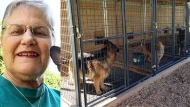 """Photo of Una donna entra in un canile e adotta il cane che nessun vuole: """"il più vecchio e difficile da adottare"""" è stata la sua richiesta"""